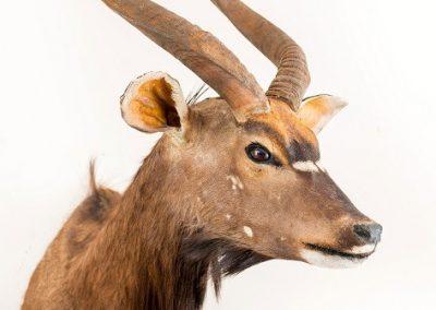 gazelle seite